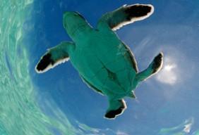 Aldabra Foundation